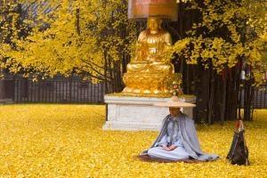 """Cây \""""vàng\"""" 1.400 năm tuổi ở Trung Quốc"""